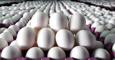 Almanya Hollanda'dan kaç adet yumurta aldı?