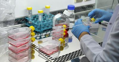 Almanya'da koronavirüs vakası 5'e yükseldi