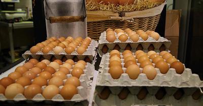 Ilacli yumurta skandali Avrupa'ya yayiliyor