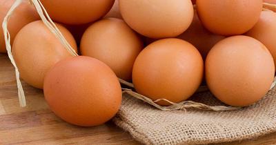 Almanya'da yumurta üreticilerine soruşturma başlatıldı